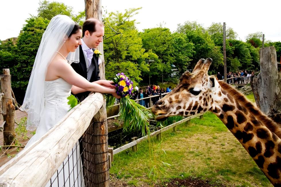 weddingszooLondon-Zoo-2
